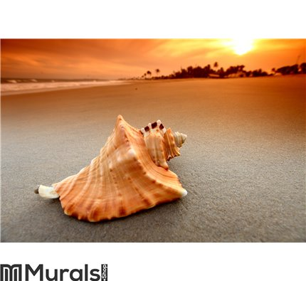 Shell Wall Mural Wall art Wall decor