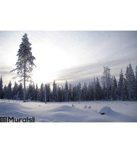 Winter wonderland in twilight, Sweden Wall Mural