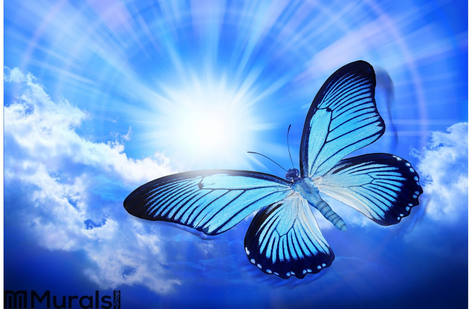 butterfly blue sky sun nature wall mural