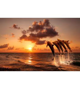 Beautiful sunset with dolphins Wall Mural