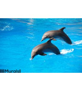 Dolphin jumping Wall Mural Wall art Wall decor