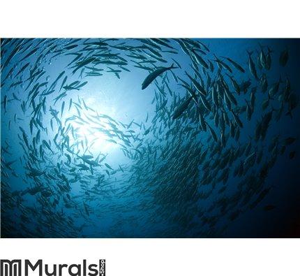 Fish in the ocean Wall Mural Wall art Wall decor