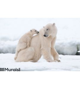 Polar bear with cub Wall Mural Wall art Wall decor
