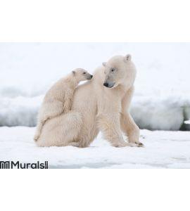 Polar bear with cub Wall Mural