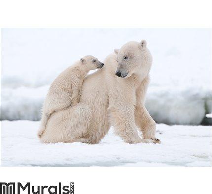Polar bear with cub Wall Mural Wall art Wall decor