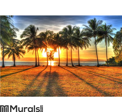 Sunlight rising behind palm trees in HDR, Port Douglas,Australia Wall Mural Wall art Wall decor
