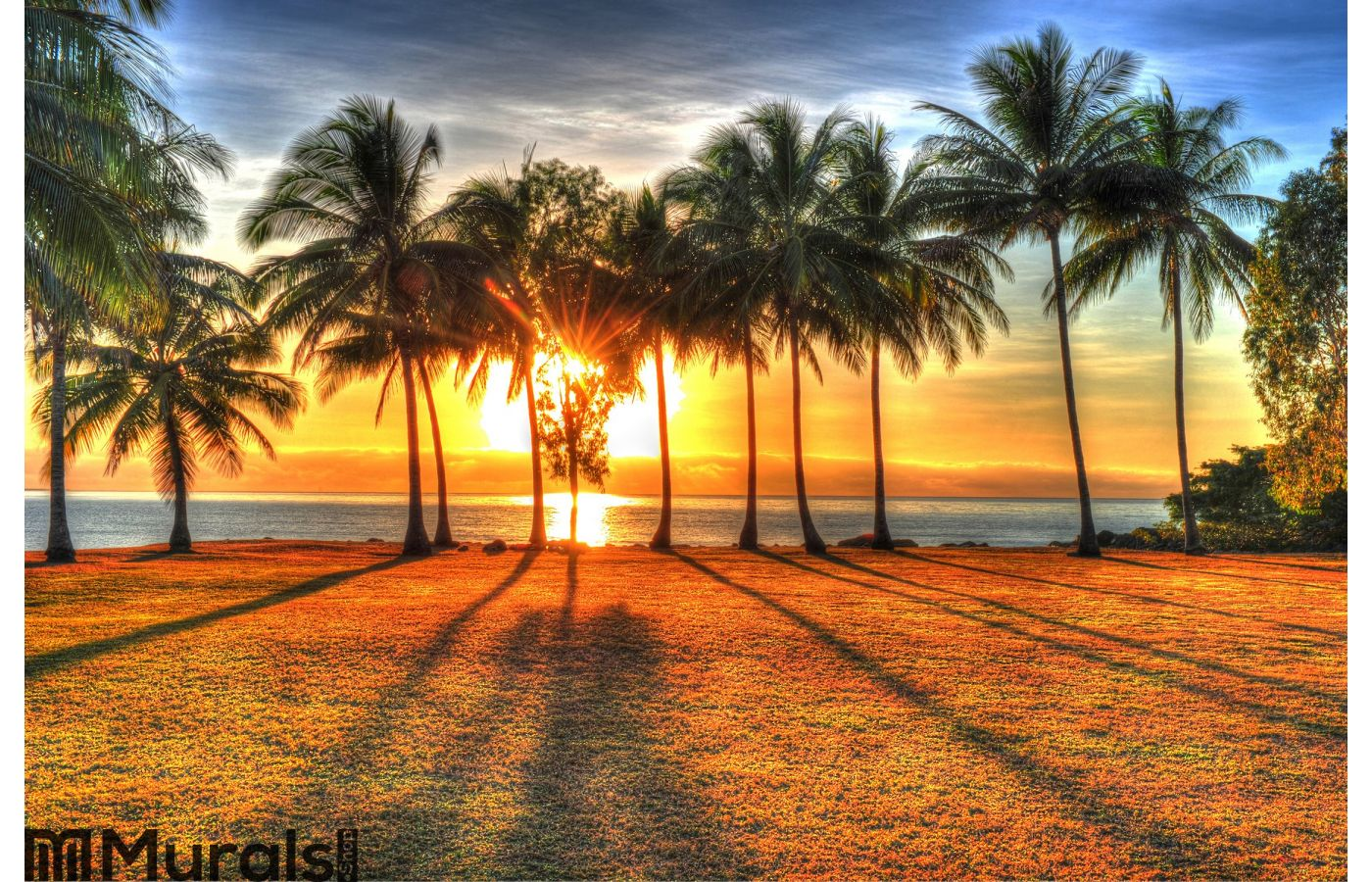 Sunlight rising behind palm trees in hdr port douglas for Earth rising wall mural