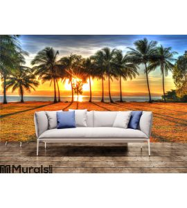Sunlight rising behind palm trees in HDR, Port Douglas,Australia Wall Mural Wall art Wall decor