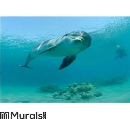 Dolphin in red sea Wall Mural Wall art Wall decor