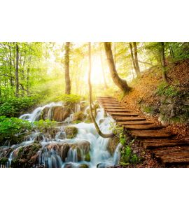Deep forest stream with crystal clear water in the sunshine Wall Mural