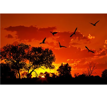 Landscape of Africa with warm sunset Wall Mural Wall Tapestry tapestries