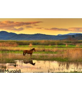 Horse in landscape Wall Mural Wall Tapestry tapestries