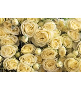 Yellow roses Wall Mural Wall art Wall decor