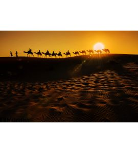 Camel Caravan Wall Mural Wall art Wall decor