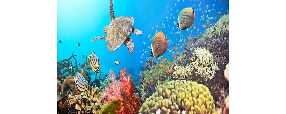Underwater Panorama Wall Mural
