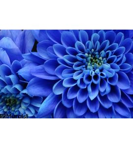 Close Up Blue Flower Wall Mural Wall art Wall decor