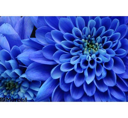 Close Up Blue Flower Wall Mural Wall art Wall decor