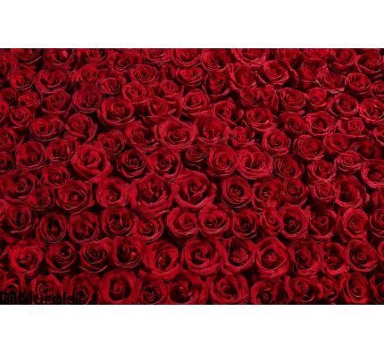 Bed Roses Wall Mural Wall art Wall decor