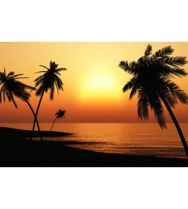 Tropical Sunset Palms Silhouette Wall Mural Wall art Wall decor
