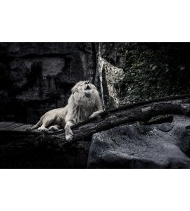 White Lion Wall Mural