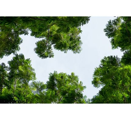 Tree Surround Space Sky Background Wall Mural Wall art Wall decor