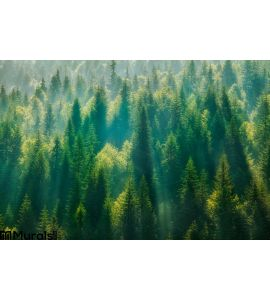 Pine Tree Forest Wall Mural Wall art Wall decor