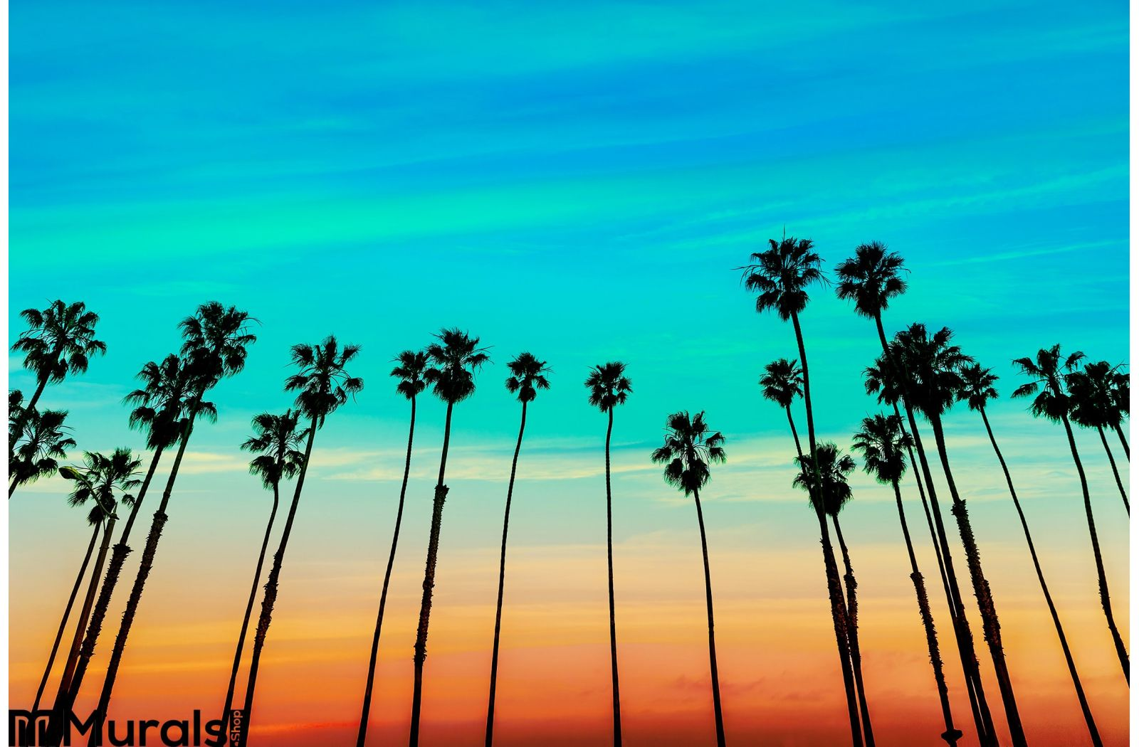California Sunset Palm Tree Rows Santa Barbara Wall Mural