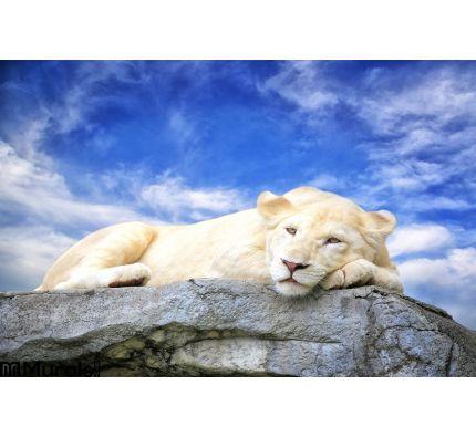 White Lion Sleep Rock Wall Mural Wall art Wall decor