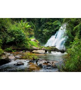Tropical Rain Forest Landscape Pha Dok Xu Waterfall Thailand Wall Mural Wall art Wall decor