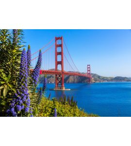 Golden Gate Bridge San Francisco Purple Flowers California Wall Mural