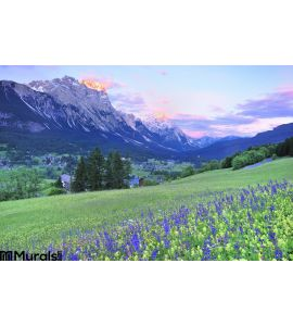Flower field and sunset at Dolomite Wall Mural