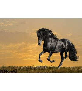 Black Horse Runs Gallop Wall Mural