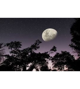 Moon Stars Dark Forest Night Sky Wall Mural Wall Tapestry tapestries