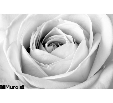 White Rose Close Up Wall Mural Wall Tapestry tapestries
