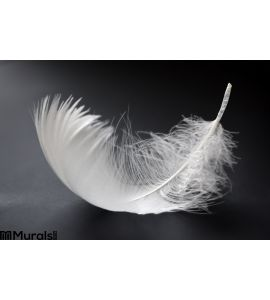 White Feather Wall Mural