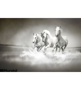 Herd White Horses Running Water Wall Mural