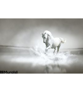 White Horse Running Water Wall Mural