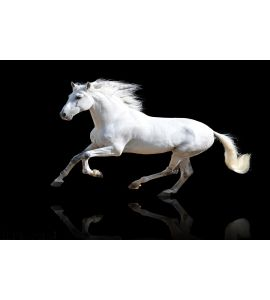 White Horse Black Wall Mural