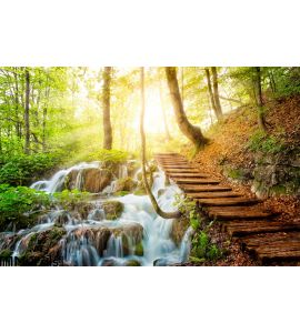Deep Forest Stream Crystal Clear Water Sunshine Wall Mural