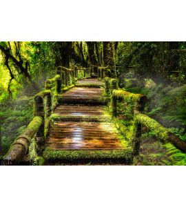 Beautiful Rain Forest Ang Ka Nature Trail Wall Mural