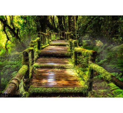 Beautiful Rain Forest Ang Ka Nature Trail Wall Mural Wall Tapestry tapestries