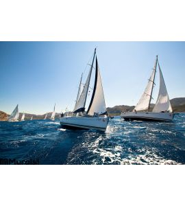 Sailing Regatta Wall Mural