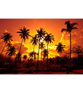 Coconut Palms Sand Beach Tropic Sunset Wall Mural Wall Tapestry tapestries