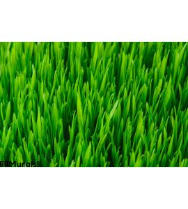 Green Grass Texture Wall Mural