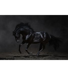 Galloping black horse on dark background Wall Mural