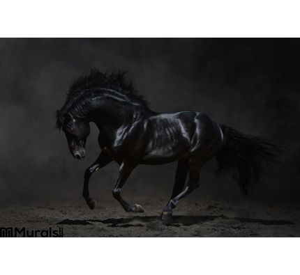 Galloping black horse on dark background Wall Mural Wall Tapestry tapestries