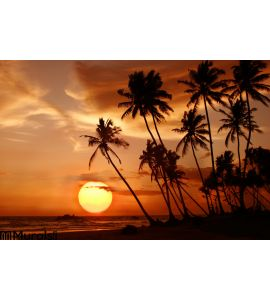 Sunset at the tropical beach in Sri Lanka Wall Mural Wall Tapestry tapestries