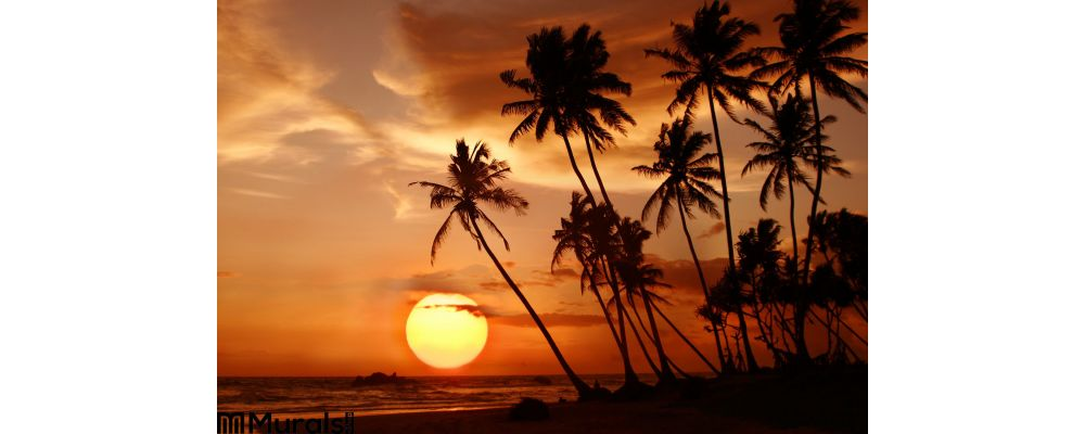 Sunset at the tropical beach in Sri Lanka Wall Mural