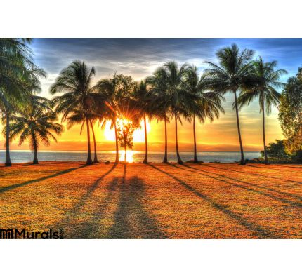 Sunlight Rising Behind Palm Trees Hdr Port Douglas Australia Wall Mural Wall Tapestry tapestries