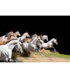 Purebred Horses Herd Black Wall Mural
